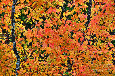 Photograph - Fall Colors In Idaho by Sam Rosen