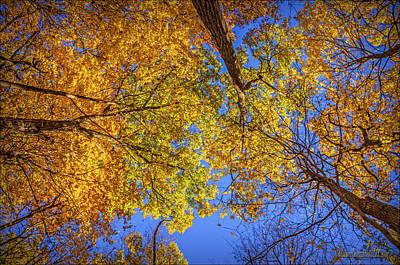 Fall Colors In The Sky  Art Print by LeeAnn McLaneGoetz McLaneGoetzStudioLLCcom