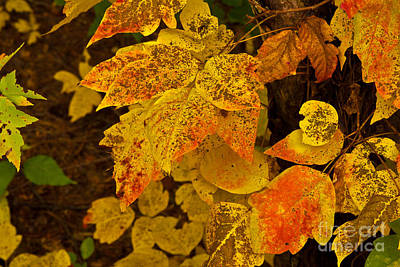 Photograph - Fall Colors by Jill Smith