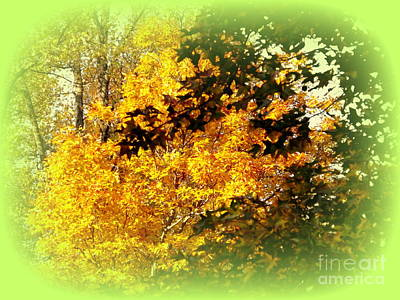 Photograph - Fall Colors by John Potts