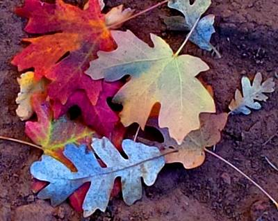 Photograph - Fall Colors by Kruti Shah