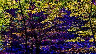 Fall Colors Art Print by Louis Dallara