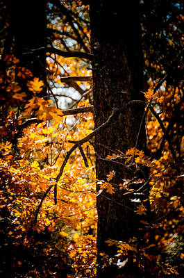 Photograph - Fall Colors by Mickey Clausen