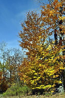 Mixed Media - Fall Colors Mm by Doug Heavlow