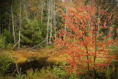 Photograph - Fall Colors Near Acadia Maine Img 6594 by Greg Kluempers