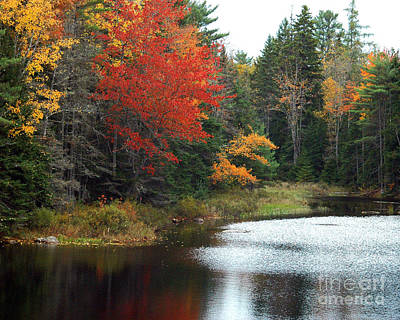 Photograph - Fall Colors On A Lake by Robert  Suggs