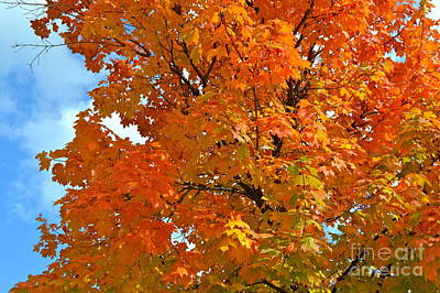 Photograph - Fall Colors Orange by Pamela Walrath