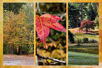 Photograph - Fall Colors Triptych by Judy Vincent