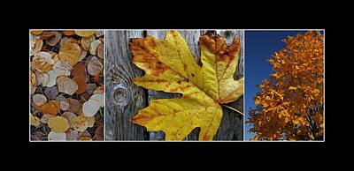 Photograph - Fall Colors Triptych by Patricia Strand