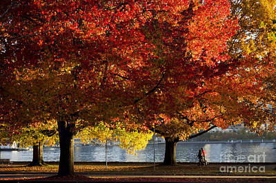 Photograph - Fall Colour In Stanley Park by Maria Janicki