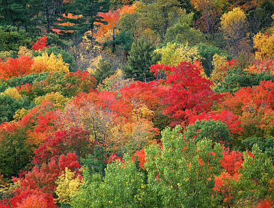 Photograph - Fall Colours In Gatineau Park Quebec by Rob Huntley
