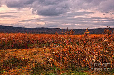 Photograph - Fall Corn Fields Of West Virginia by Kathleen K Parker