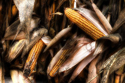 Photograph - Fall Corn Harvest by Michael Eingle