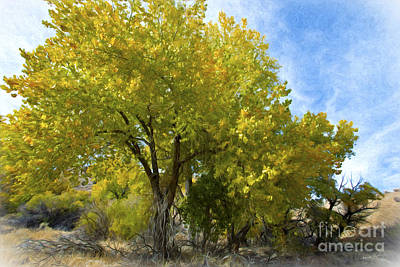 Fall Cottonwoods Art Print by Dianne Phelps