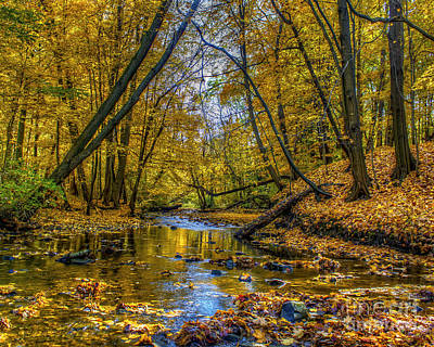 Fall Creek Art Print by Tim Buisman