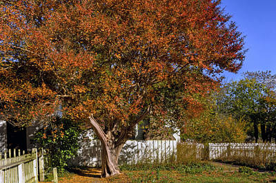 Photograph - Fall Crepe Myrtle Williamsburg Garden by Jerry Gammon