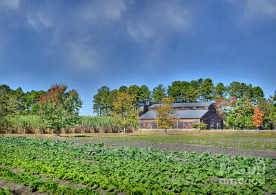 Photograph - Fall Crops - Color by Kathy Baccari