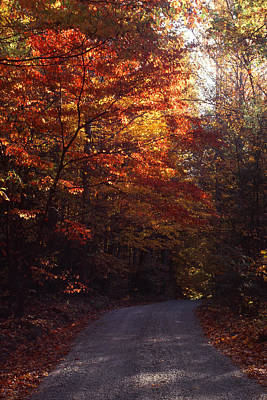 Photograph - Fall Drive In Woods by Harold Rau