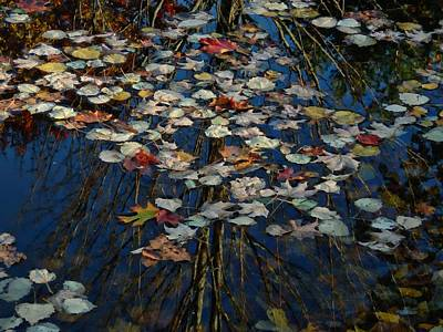 Photograph - Fall Ending by Marcia Lee Jones