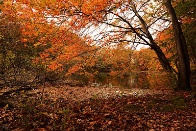 Maple Leaf Art Photograph - Fall Escape by Lourry Legarde