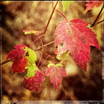 Photograph - Fall Fades by Frank Winters