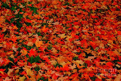 Photograph - Fall Fell by Eunice Miller