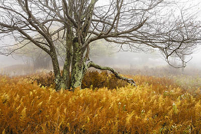 Monongahela National Forest Photograph - Fall Ferns And Fog by Bill Swindaman