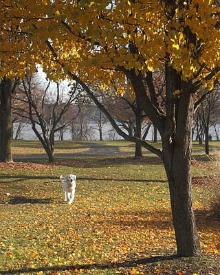 Photograph - Fall Fetch by Coby Cooper