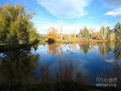 Fall Flight Reflected Art Print
