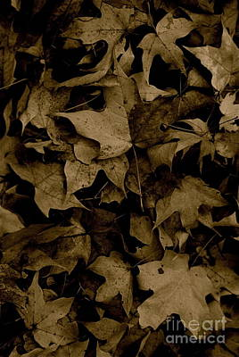 Photograph - Fall Floor by Tim Good