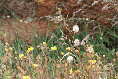 Photograph - Fall Flora by Susan Herber