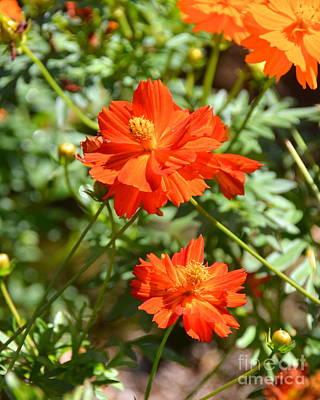 Photograph - Fall Flowers by Carol  Bradley