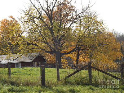 Photograph - Fall Foilage In Country by Brenda Brown