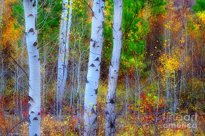 Photograph - Fall Foilage by Tara Turner