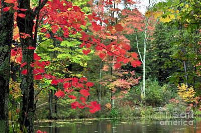 Photograph - Fall Foliage  by Staci Bigelow
