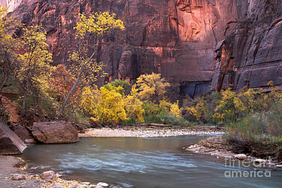 Photograph - Fall Foliage Along The Virgin River by Fred Stearns