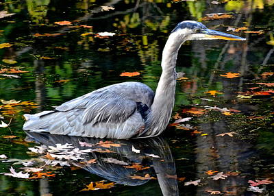 Photograph - Fall Foliage And Fowl by Frozen in Time Fine Art Photography
