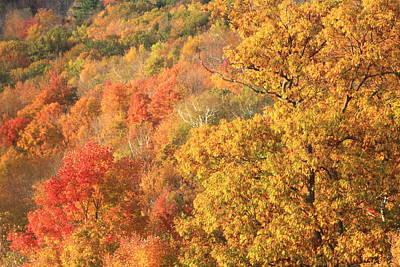 Photograph - Fall Foliage Berkshires by John Burk