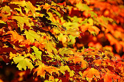 Fall Foliage Colors 13 Art Print