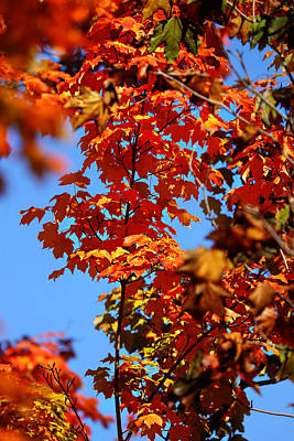 Fall Foliage Colors 15 Art Print