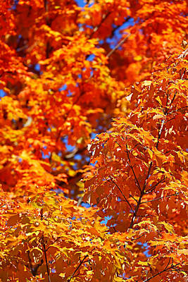 Fall Foliage Colors 17 Art Print