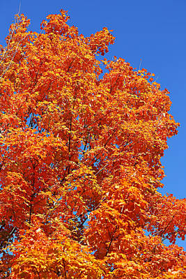 Fall Foliage Colors 18 Art Print