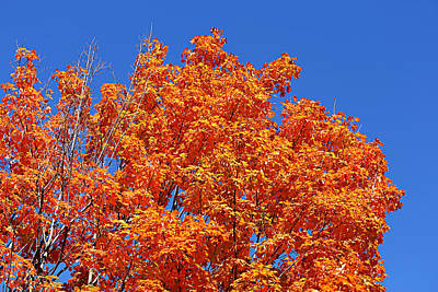 Fall Foliage Colors 19 Art Print