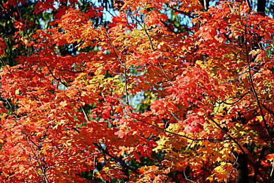 Fall Foliage Colors 22 Art Print by Metro DC Photography