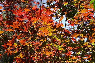 Photograph - Fall Foliage by Denise Mazzocco