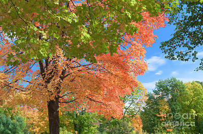 Photograph - Fall Foliage Devils Lake Wisconsin by David Perry Lawrence
