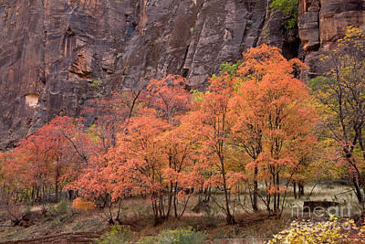 Photograph - Fall Foliage by Fred Stearns