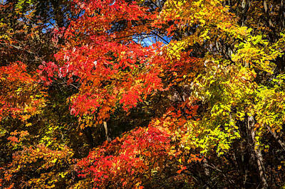 Photograph - Fall Foliage Great Smoky Mountains  by Rich Franco
