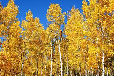 Photograph - Fall Foliage In Colorado by Marilyn Burton