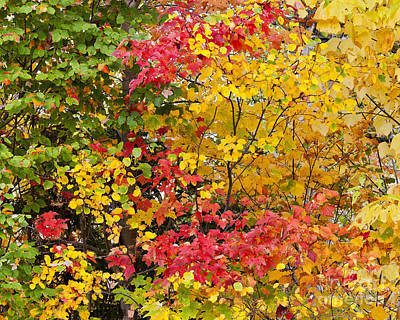 Photograph - Fall Foliage Palette by Alan L Graham